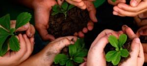 Projeto quer investigar o processo de alfabetização ambiental