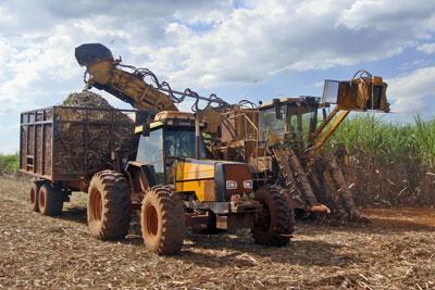 Colheitadeiras em um campo de cana-de-açúcar em Piracicaba, São Paulo - Foto: Mario Roberto Duran Ortiz / Wikimedia Commons