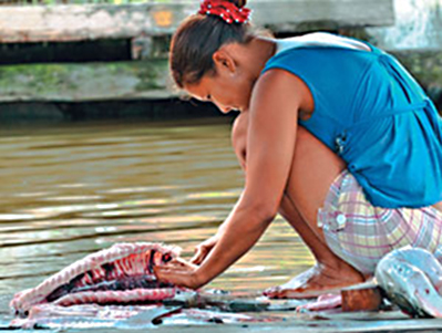 Consumo de peixe fresco cai no Amazonas - Foto: Eduardo Cesar/Pesquisa Fapesp