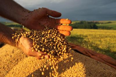 O Brasil é o segundo maior produtor de soja do mundo - Foto: Jonas Oliveira/Fotos Públicas