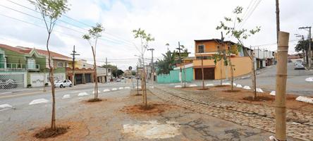 Alternativa para aumentar a arborização sem afetar a cirlulação de pedestres na calçada e também a fiação - Foto: Fabio Arantes/SECOM-PMSP