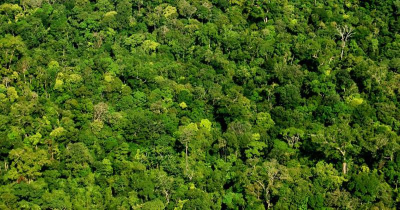 Vista aérea da Floresta Amazônica – Foto: Luciana Macêdo via Fotos Públicas