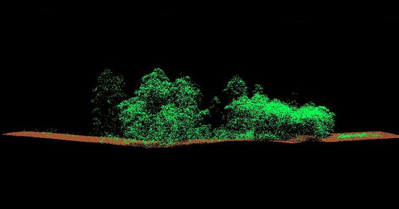 Nuvem de pontos de uma floresta produzida pelos equipamentos de escaneamento a laser - Imagem: Laboratório de Realidade Virtual
