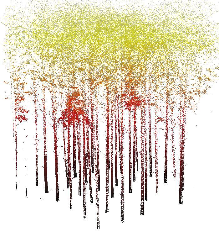 Eucaliptos vistos através dos pontos gerados pelos equipamentos - Imagem: Laboratório de Realidade Virtual