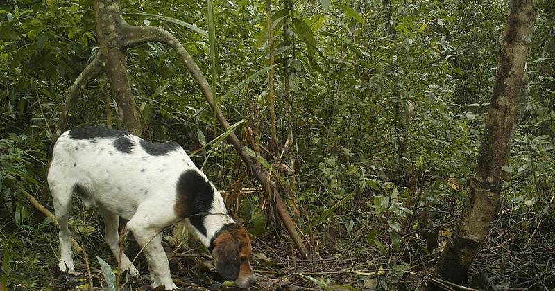 Cachorro encontrado em área remanescente da mata atlântica