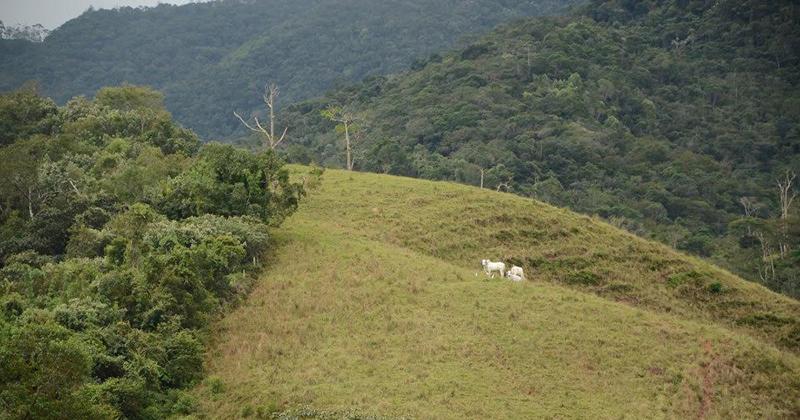 Área aberta originada pelo desmatamento entre extensões de floresta nativa - Foto: Fernando Ribeiro