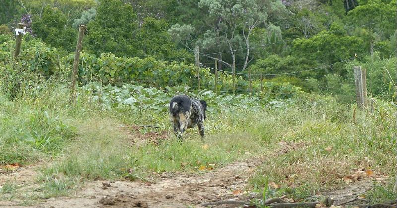 Cão no entorno da reserva florestal - Foto: Divulgação