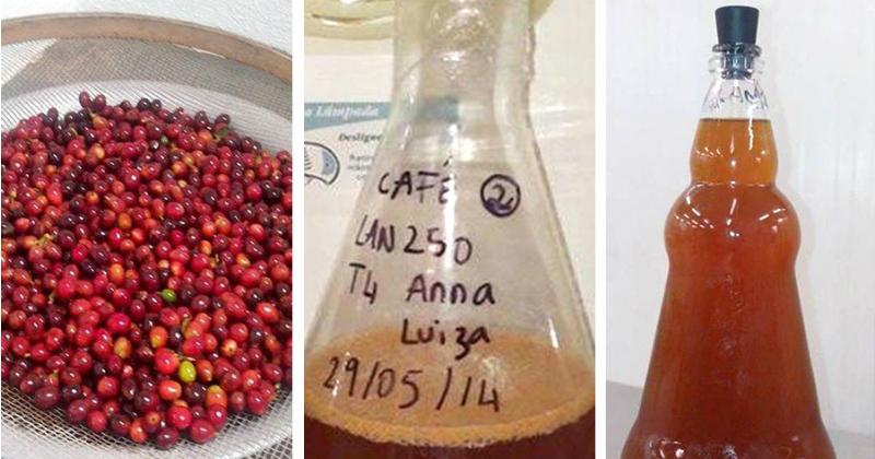 Etapas da produção da bebida em caráter experimental - Foto: Anna Flavia de Souza Silva