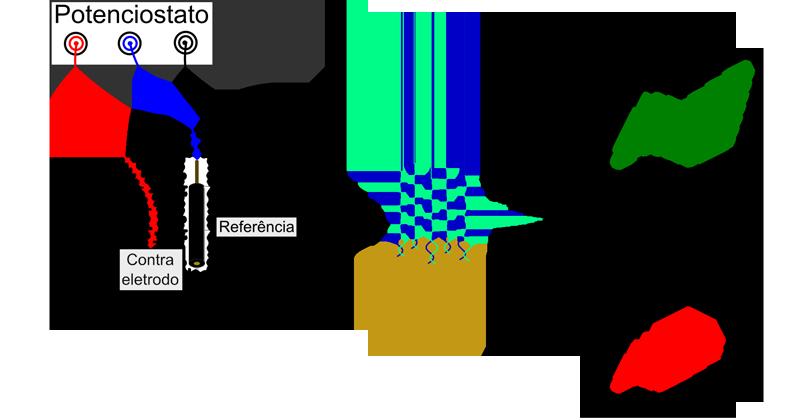 Se uma fita de DNA se unir àquela colada no eletrodo do sensor haverá uma resposta de impedância que acusará a presença da mutação. Imagem: Laís Ribovski