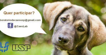 Instituto de Psicologia recruta cães domésticos para estudo