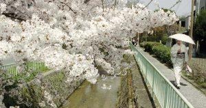 O desafio de ensinar a cultura brasileira em Kyoto