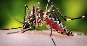 Chip usa material genético para detectar vírus zika em 90 minutos