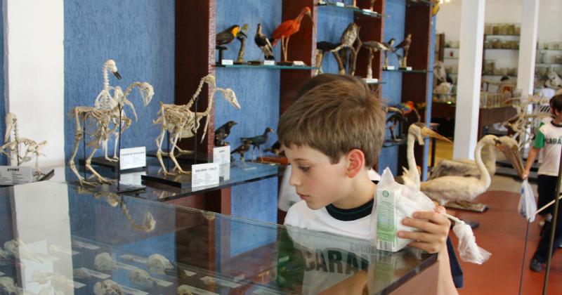 Criança examinando exemplares de animais que estão em exibição no Museu de Anatomia Veterinária da Faculdade de Medicina Veterinária e Zootecnia da Universidade de São Paulo (FMVZ – USP). Foto: Marcos Santos.
