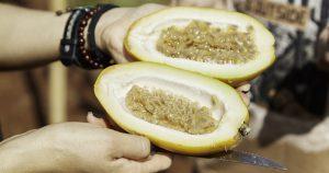 Estudo genético busca elevar produtividade e qualidade do maracujá-doce
