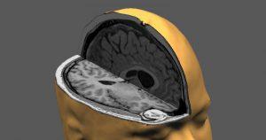 Projeto sobre bases neurais da caça e defesa seleciona bolsista