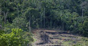 Desmatamento na Amazônia cresce quase 30% nos últimos 12 meses