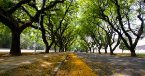 Saneamento básico e arborização são destaques no Plano de Cidade proposto para Ribeirão Preto