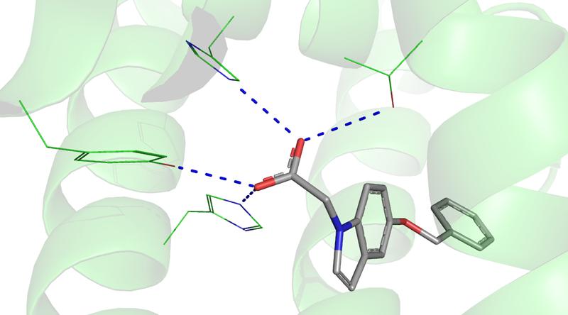 Representação do receptor PPAR, relacionado ao diabetes, em ligação com ligante - Imagem: Vinícius G. Maltarollo