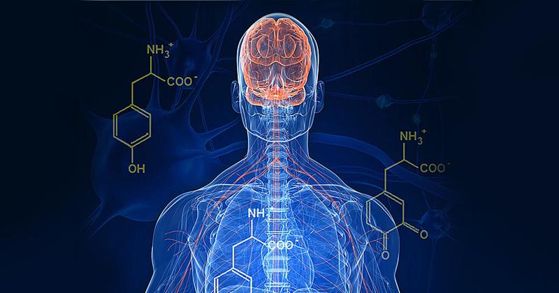 Neurônios que auxiliam no controle motor são afetados por proteína tóxica no cérebro de parkinsonianos. Estudos mostram que antibiótico da família das tetraciclinas pode retardar início desses sintomas - Foto: EMSL via Visual Hunt