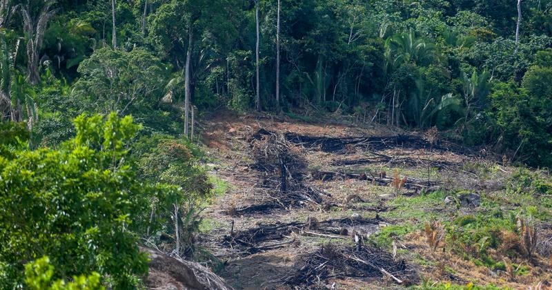 Deslocamentos florestais em uma parte da Amazônia podem desencadear mudanças de difícil previsão em outras áreas - Foto: Cecília Bastos/USP Imagens