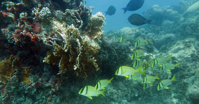 Diferentes habitats dos ambientes costeiros são tratados em publicações que analisam papel da biodiversidade nos serviços ecossistêmicos (foto: recife de coral no litoral da Bahia - Foto: Ruy Kikuchi