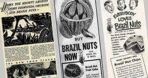 Direto da Amazônia, livro revela como a castanha-do-pará ganhou o mundo