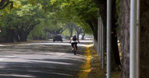 Gestão é a chave quando se fala em arborização urbana
