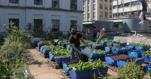 Grupo de estudos do IEA pesquisa agricultura urbana