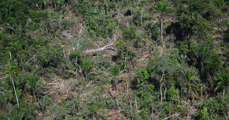 Maioria das ações na Amazônia que desafiaram interesses econômicos maiores terminou em tragédia: de assassinatos a populações sendo expulsas de terras. Foto: Vinícius Mendonça / Banco de Imagens do Ibama