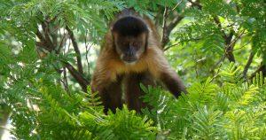 Diversidade de espécies faz de São Carlos um museu a céu aberto