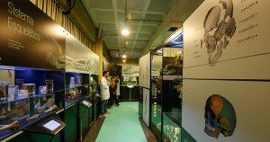 Museu da Anatomia Humana reabre com exposição interativa