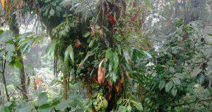 """Em artigo na """"Science"""", brasileiros saem em defesa da biodiversidade"""