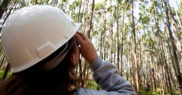Cursos da USP: a engenharia que transforma e preserva a floresta