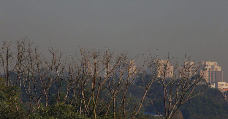 Regiões mais centrais da cidade são mais ocupadas por construções, enquanto que regiões mais afastadas têm mais árvores – Foto: Marcos Santos/USP Imagens