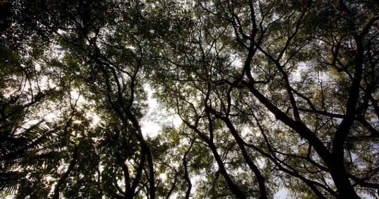 O material particulado é um dos poluentes que mais afetam a respiração humana e também um dos mais absorvidos pelas plantas – Foto: Marcos Santos/USP Imagens