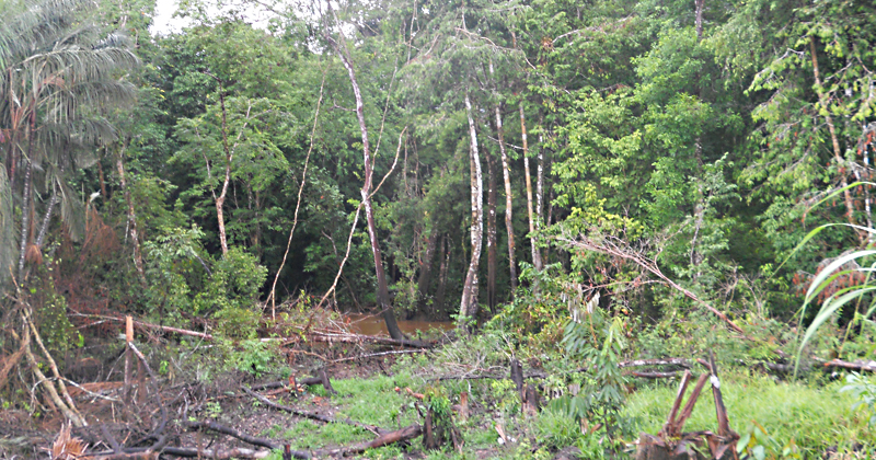 Maior incidência de malária está associada a áreas de floresta nativa devastadas com menos de 5 km2 de extensão – Foto: cedida pela pesquisadora