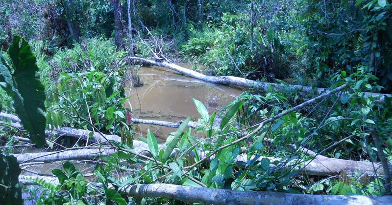Um quilômetro quadrado desmatado na Amazônia equivale a 27 novos casos de malária,Amazônia,desmatamento na Amazônia,desmatamento na Amazônia aumenta os casos de malária,malária,malária na Amazônia