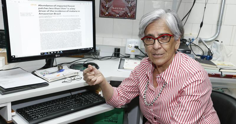Professora Maria Anice Mureb Sallum pesquisa sobre malária pela Faculdade de Saúde Pública (FSP)- Foto: Marcos Santos/USP Imagens