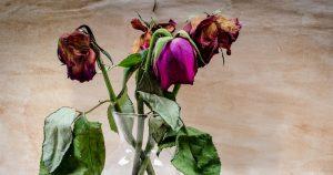 Mulheres vítimas de violência possuem oito vezes mais chances de ir a óbito