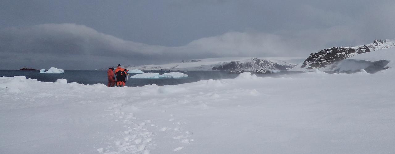 Fungo em alga da Antártida mostra potencial contra infecções e outras doenças