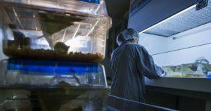 Curso a distância capacita ao uso e manejo de animais de laboratório
