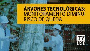 Árvores tecnológicas: monitoramento diminui risco de queda