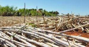 """Liberação da cana na Amazônia é """"desnecessária e perigosa"""", alerta professor da USP"""