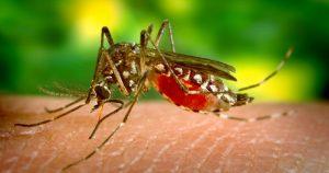 Febre amarela volta a ser ameaça durante o verão