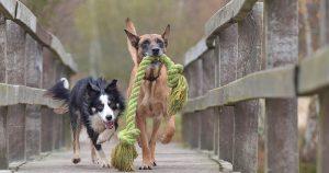 Pesquisa on-line mapeia temperamento de cães brasileiros