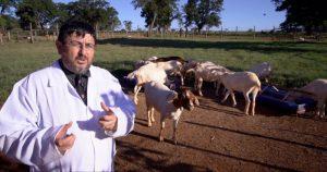 Pesquisas sobre o bem-estar animal rendem prêmio a professor da USP
