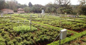 Mudança climática pode piorar a qualidade das pastagens