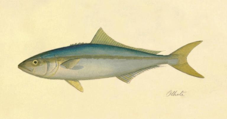 As anotações manuscritas trazem as localidades em que os peixes foram recolhidos - Foto: Reprodução/ Livro: Peixes do Brasil