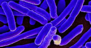 Com diagnóstico mais rápido, mais pacientes sobrevivem à sepse