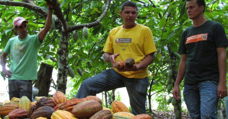 Encontro de agricultores para troca de experiências a fim de melhorar a qualidade da produção de cacau no sudeste do Pará